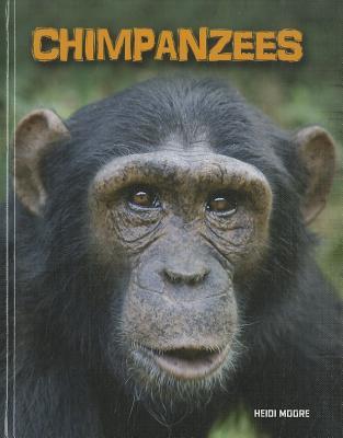 Chimpanzees By Moore, Heidi